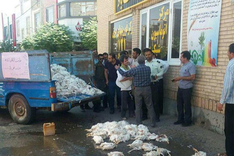 مرغداران گناباد در اعتراض به قطع برق دست به تجمع زدند