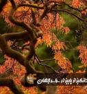 تصاویر حیرتانگیز از پاییز در سراسر جهان منبع