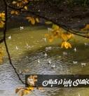آخرین روزهای پاییز در گیلان