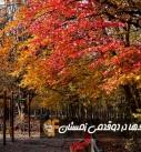 سمفونی رنگها در دوقدمی زمستان