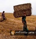 روستای زلت -بهشهر