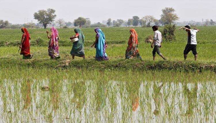 سقوط بی سابقه صادرات برنج باسماتی به ایران!