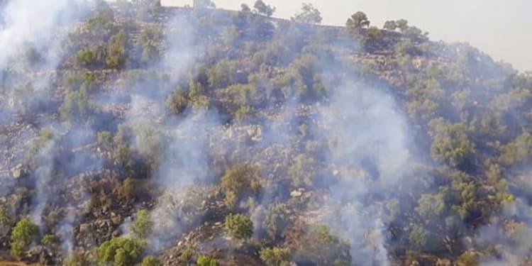آتش سوزی جنگل1