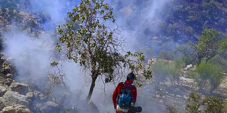 آتش شوزی جنگل ۱۱