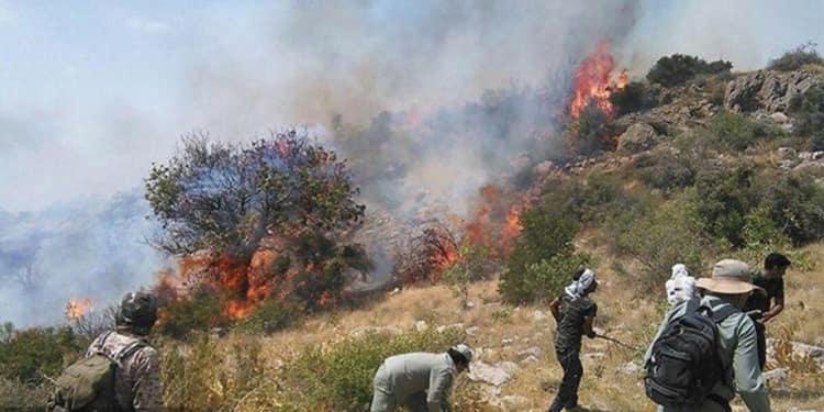 آتش شوزی جنگل ۴