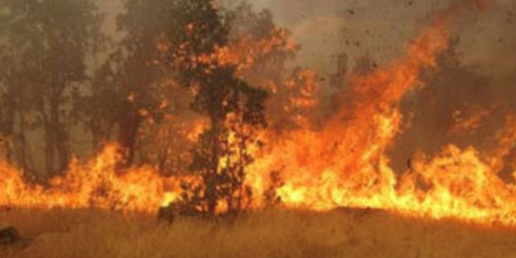 آتش شوزی جنگل ۷