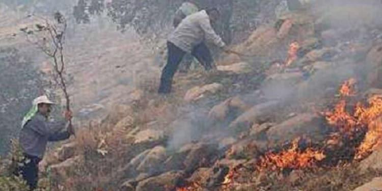 جنگل_های زاگرس در آتش می_سوزد .