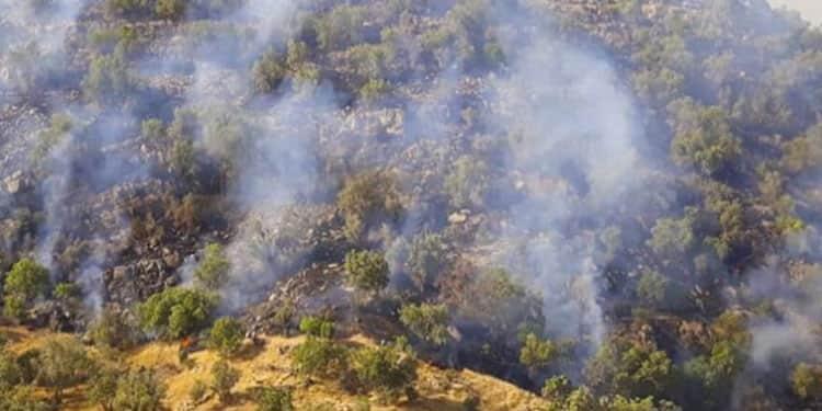آتش سوزیهای جنگلها و مراتع ایران3