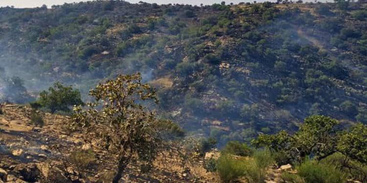 آتش سوزیهای جنگلها و مراتع ایران4