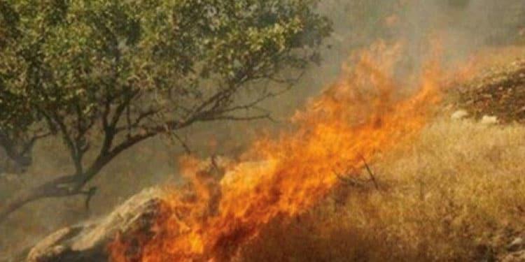 آتش سوزیهای جنگلها و مراتع ایران5