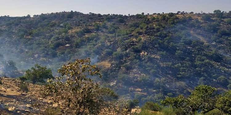 آتش سوزیهای جنگلها و مراتع ایران6