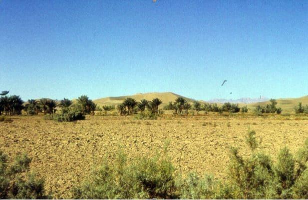 شوری خاک؛ روشهای اصلاح خاکهای شور